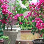 Организация палисадника: с чего начать и какие растения выбрать