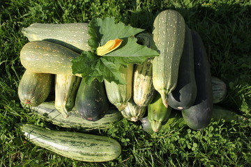 Подготовка рассады кабачков: памятка огородника
