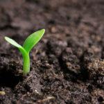 Как распознать болезни и вредителей рассады?