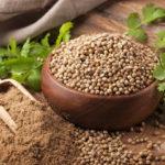 Как и когда сеять кориандр под зиму: рекомендации по выращиванию на зелень и семена в открытом грунте