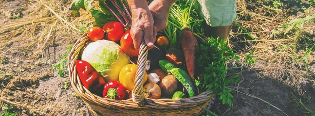 Органическое земледелие – от теории к практике. Получение овощей без химии