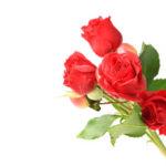 Как вырастить розу с разноцветными бутонами