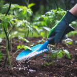 Что необходимо деревьям и кустарникам весной: правильная подкормка