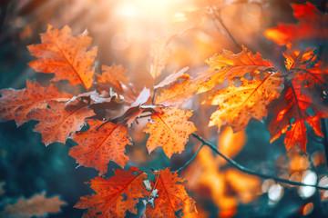 Советы по использованию опавших листьев