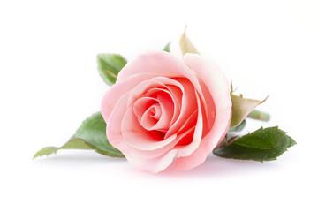 Типичные ошибки при выращивании роз