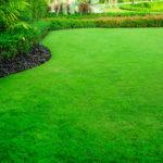 Подкормка газонной травы