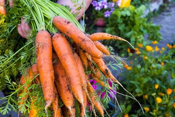 Основные секреты получения хорошего урожая моркови