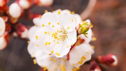 Причины несвоевременного цветения плодовых культур и способы решения проблемы