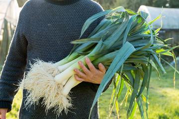 Рассада лука порея и сорта Эксибишен: выращивание, характеристика и уход