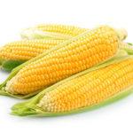 Секреты выращивания кукурузы