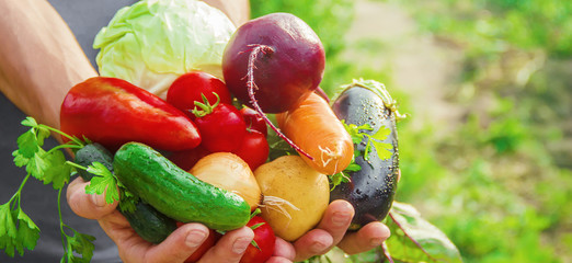 Как со своего огорода собрать семена для будущего урожая