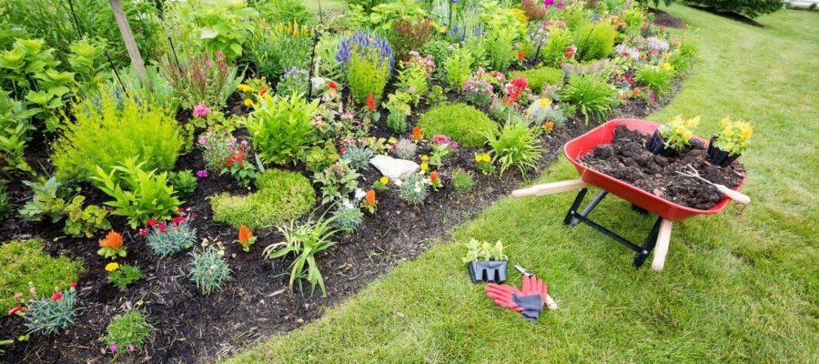 Какие сажать растения на приусадебном участке, сколько и где?