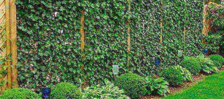 Учимся сажать декоративные растения у стены