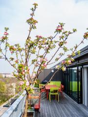 Фруктовые деревья и кустарники на балконе