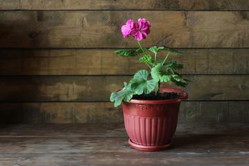 Советы любителям домашнего цветоводства
