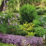 Многолетние садовые растения, которые поместятся на маленьком участке земли
