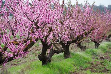 Посадка плодово-ягодных растений