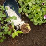 Правильный выбор удобрения — залог получения отличного урожая