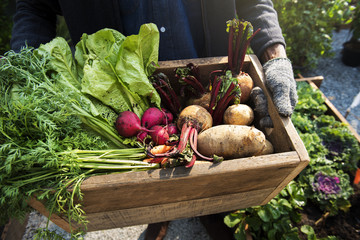 Как защитить урожай при неблагоприятных погодных условиях