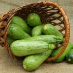 Выращивание кабачков в открытом грунте и в теплице