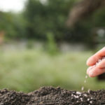 Как правильно подготовить семена к посеву?
