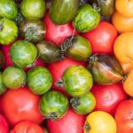 Удачный огородный эксперимент – выращивание томатов американской селекции, сорт «Лотарингская красавица»