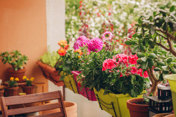 Уход за балконными растениями