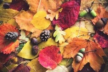 Ноябрь на даче: список важных дел