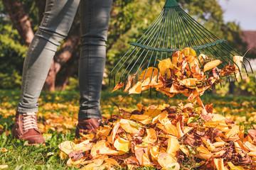 Осенние хлопоты дачника