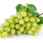 Виноград Настя (Аркадия) — прекрасный сорт из двадцатого века