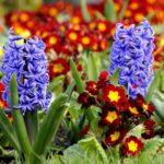 Ранние весенние цветы