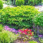 Декоративные кустарники: весенние, летние, осенние. Описание