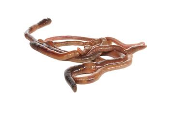 Практические аспекты разведения калифорнийских червей и использования продуктов вермифермы