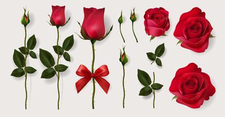 Розы. Уход за цветами в разное время года