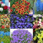Лучшие однолетние и многолетние цветы для выращивания на рассаду в марте