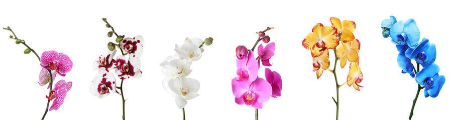 Советы по содержанию купленных в магазине орхидей: Фаленопсиса, Каттлеи, Камбрии, Ванды, Дендробиума, Пафиопедилума (Башмачка), Цимбидиума