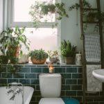 10 комнатных растений, способных украсить ванную комнату