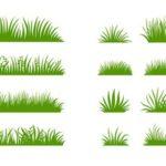 Опрятный газон своими руками: подбор травы и правила посадки