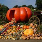 Гигантские овощи на вашей даче