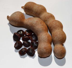 Тамаринд (Индийский финик): уход и выращивание в домашних условиях
