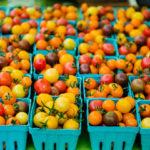 Выращивание помидоров по методу И. М. Маслова