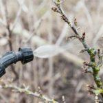 Самые ранние вредители: как не пропустить первую обработку в саду
