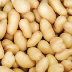 Выращиваем ранний картофель