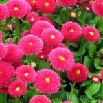 Топ-10 неприхотливых весенних цветов