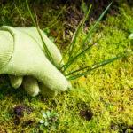 7 лучших способов борьбы с сорняками