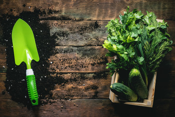 Лучшие удобрения под огурцы. Подкормки раствором янтарной кислоты для повышения урожайности тыквенных культур