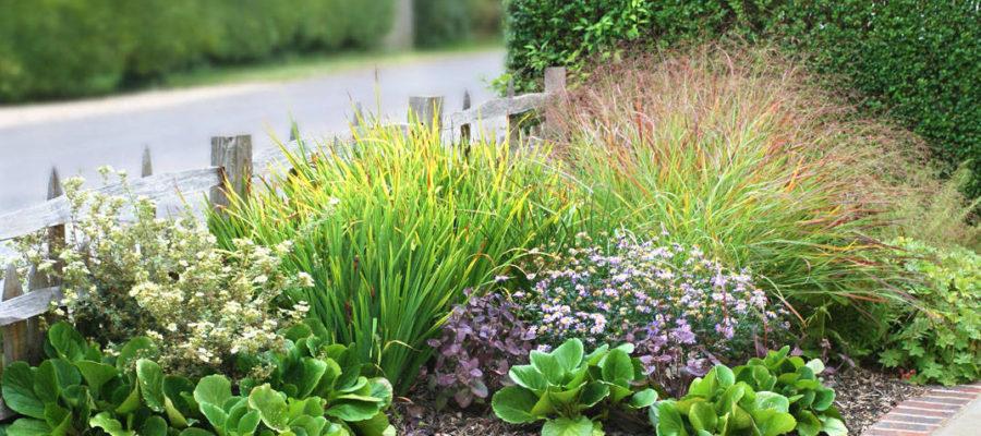 Что посадить в сухом саду?