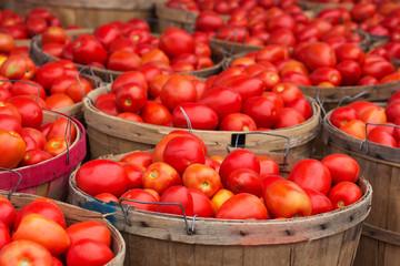 Какие ошибки совершают садоводы при выращивании помидоров?