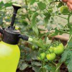 Лучшие натуральные подкормки для томатов