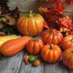 Виды и сорта тыкв: самые вкусные, неприхотливые и полезные